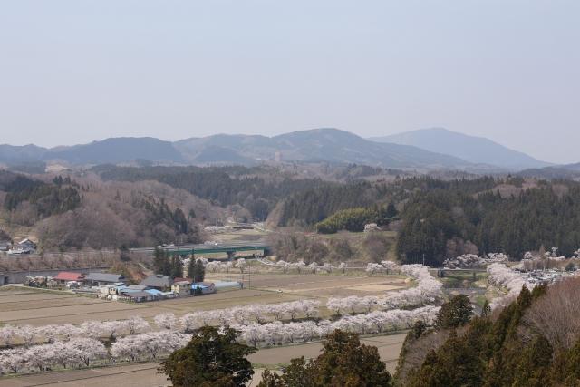 夏井川の千本桜(河口から直線距離約35km)