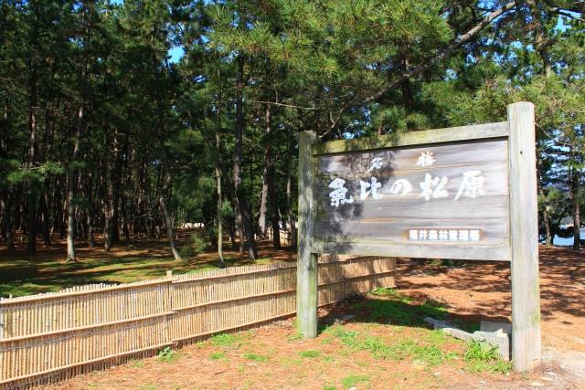 日本三大松原「気比の松原」