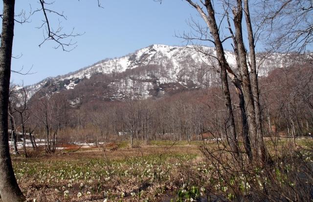 奥裾花渓谷のミズバショウ群生地