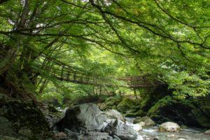 祖谷のかずら橋。日本三大奇橋